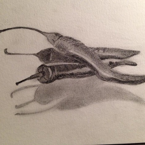 Day 135: Peppers in Pencil on Watercolor Paper